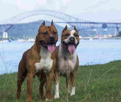 Mexican Dog Breeds, dog breeds from mexico