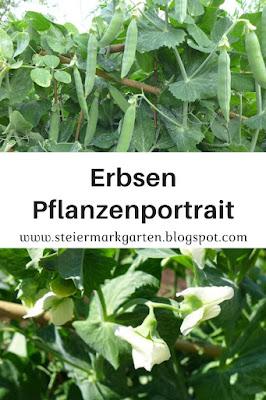 Erbsen-Pflanzenportrait-Pin-Steiermarkgarten