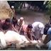 """18+ """"ถ้าเราพูด บิสมิลลา อัลลอฮ์ ฮู วัทวัท ฯลฯ ส่งสัตว์ สัตว์ มันไม่เจ็บ"""" ไปดูหลักฐานกัน"""