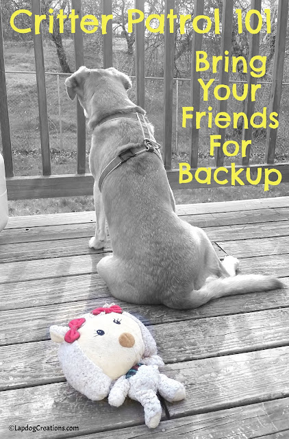 Critter Patrol 101: Bring Your Friends for Backup! #seniordog #rescuedog #houndlife #LapdogCreations ©LapdogCreations