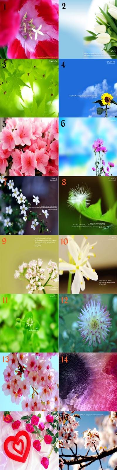 400+ Gambar Bunga Cantik Untuk Wallpaper  Paling Keren