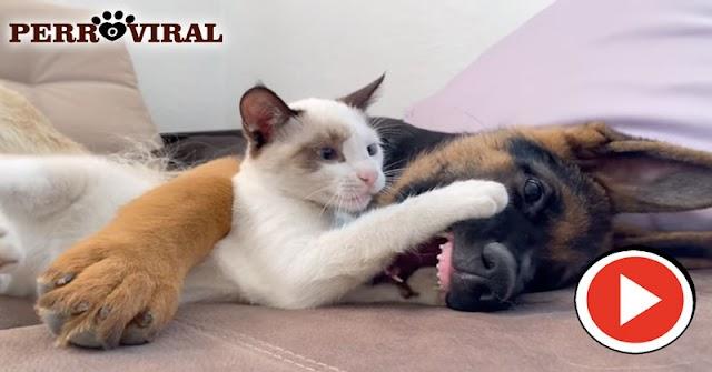 ADIVINA | Este perro se come al gato o juega con él?