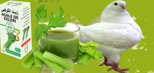 فوائد زيت الكرفس لصحة طائر الحمام الجنسية وكثرة تكاثره