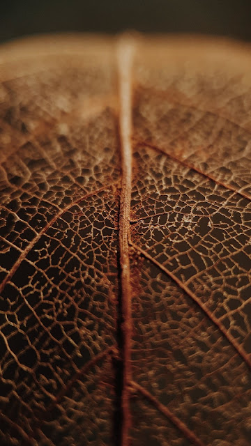 Wallpaper, Veins, Dry, Macro