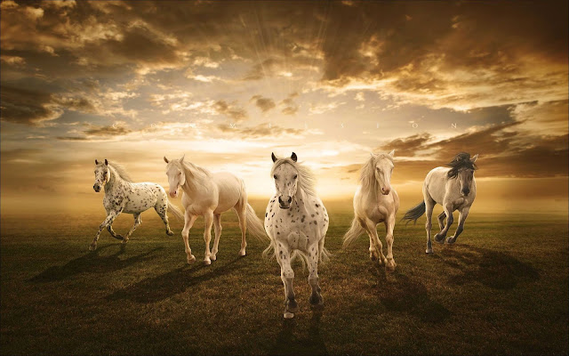 desktop horse wallpaper