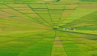 crop circle di Flores