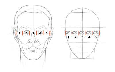 Head proportions chart: The head is about five eyes wide.