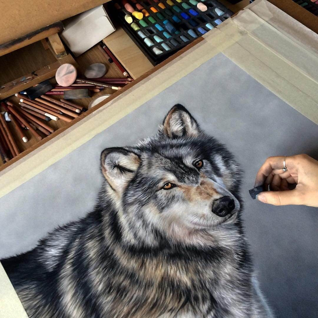 09-Nuka-the-Wolf-Danielle-Fisher-Realistic-Animal-Portrait-Pastel-Drawings-www-designstack-co