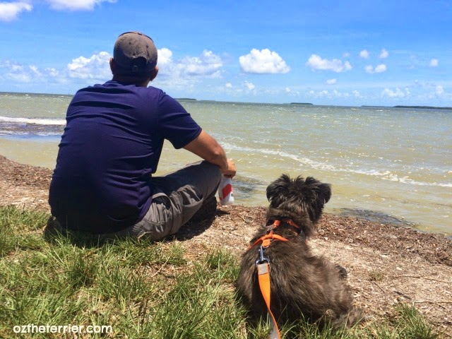 Oz the Terrier at Florida Bay in Everglades National Park