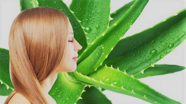Manfaat lidah buaya untuk rambut