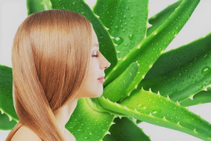 5 Manfaat Lidah Buaya Untuk Kesehatan Rambut, Wajib Dicoba?