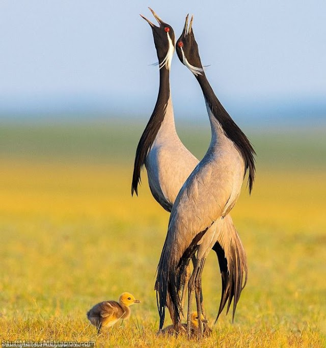The Best Bird Photography from Bird Photographer of The Year 2021