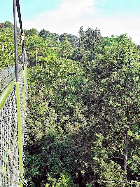 Arborismo no parque nacional MacRitchie Treetop