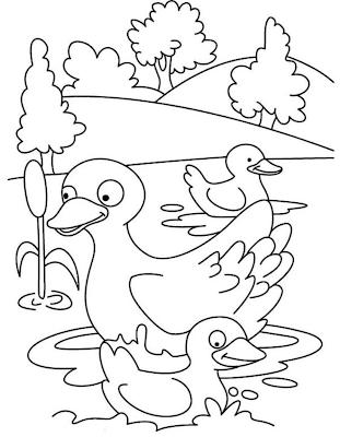 Gambar Sketsa Bebek Berenang