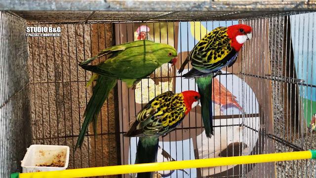 Φανταστικά πτηνά συντροφιάς στην ετήσια έκθεση στο Άργος (βίντεο)