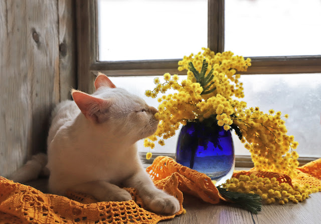 Companion Animal Psychology turns 8; cat sniffing vase of flowers