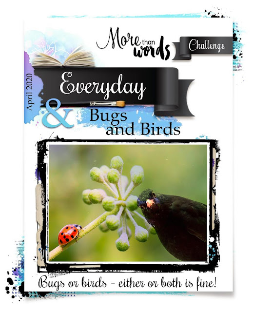 EVERYDAY & BUGS AND BIRDS
