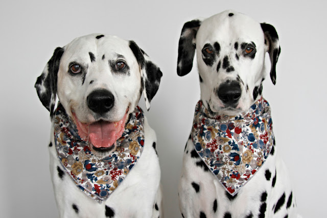 Two Dalmatian dogs wearing matching bandanas with overlocked edges