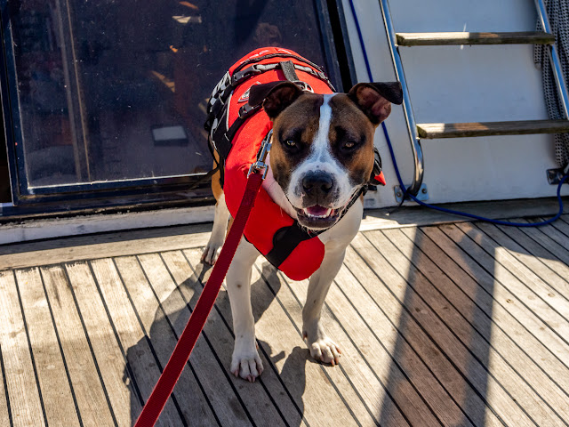 Photo of Ruby on Ravensdale's aft deck before she decided it was too hot