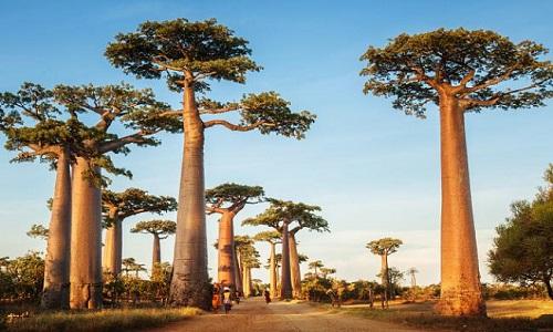 Madagaskar Nasıl Bir Ülke