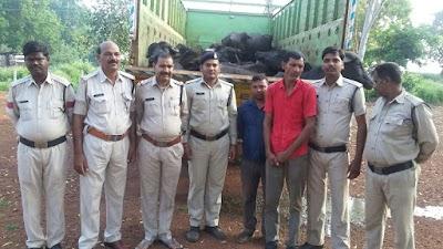 भैसों को भरकर ले जा रहा वाहन पुलिस ने पकडा