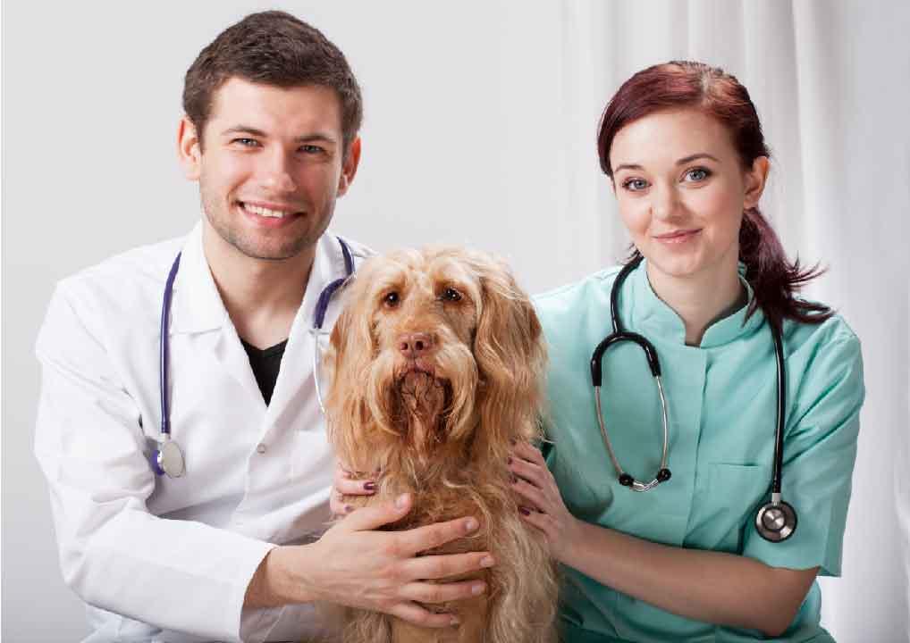 police d'assurance, mutuelle chien, assurance chien, assurance pour animaux de compagnie, assurance pour animaux domestiques, assureur, animal de compagnie