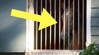 This Horse Hasn't Been Let Out Of His Stall In YEARS