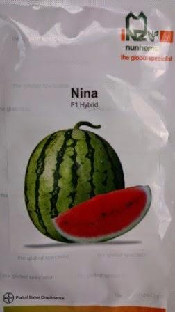Semangka Nina, Buah besar, Semangka Nina harga Murah, Benih Nina,buah keras,tahan simpan,tahan pecah, tahan angkut, cepat panen,rasa manis,murah