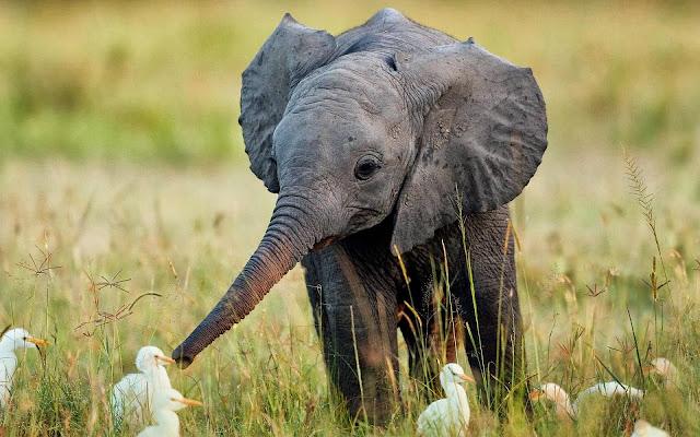 Foto met baby olifant en eenden