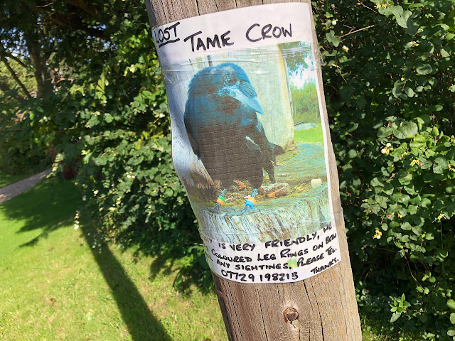 Wanted poster for crow