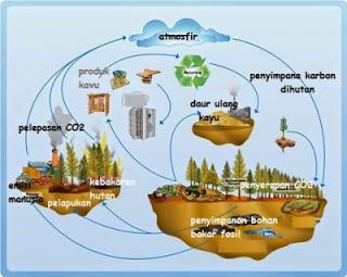 Perbedaan Siklus Nitrogen dan Siklus Karbon, Siklus Karbon