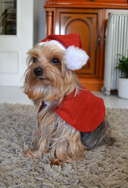 Disfraz Papá Noël para perros