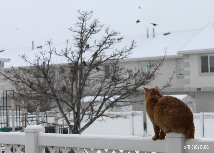 A red tabby perched on a fence post watches robins in a tree while the snow falls. // The Red Cat & The Red Chested Robins | WWW.THEJOYBLOG.NET