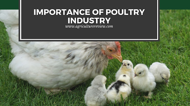 importance of poultry industry