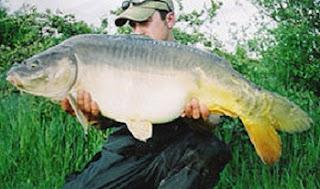 tips jitu teknik memancing, Resep Umpan Mancing Galatama Ikan Mas Babon,