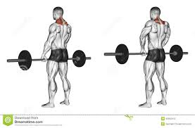 The Trapezius Works to Stabilize the Shoulders and the Upper Back