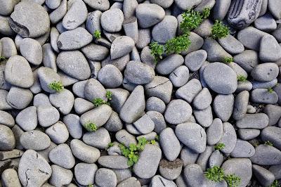 Batu - seloki
