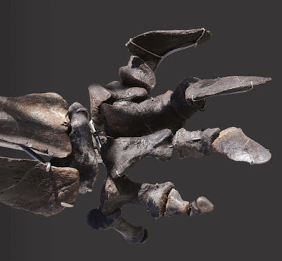 Στο «σφυρί» δεινόσαυρος 155 εκατομμυρίων ετών
