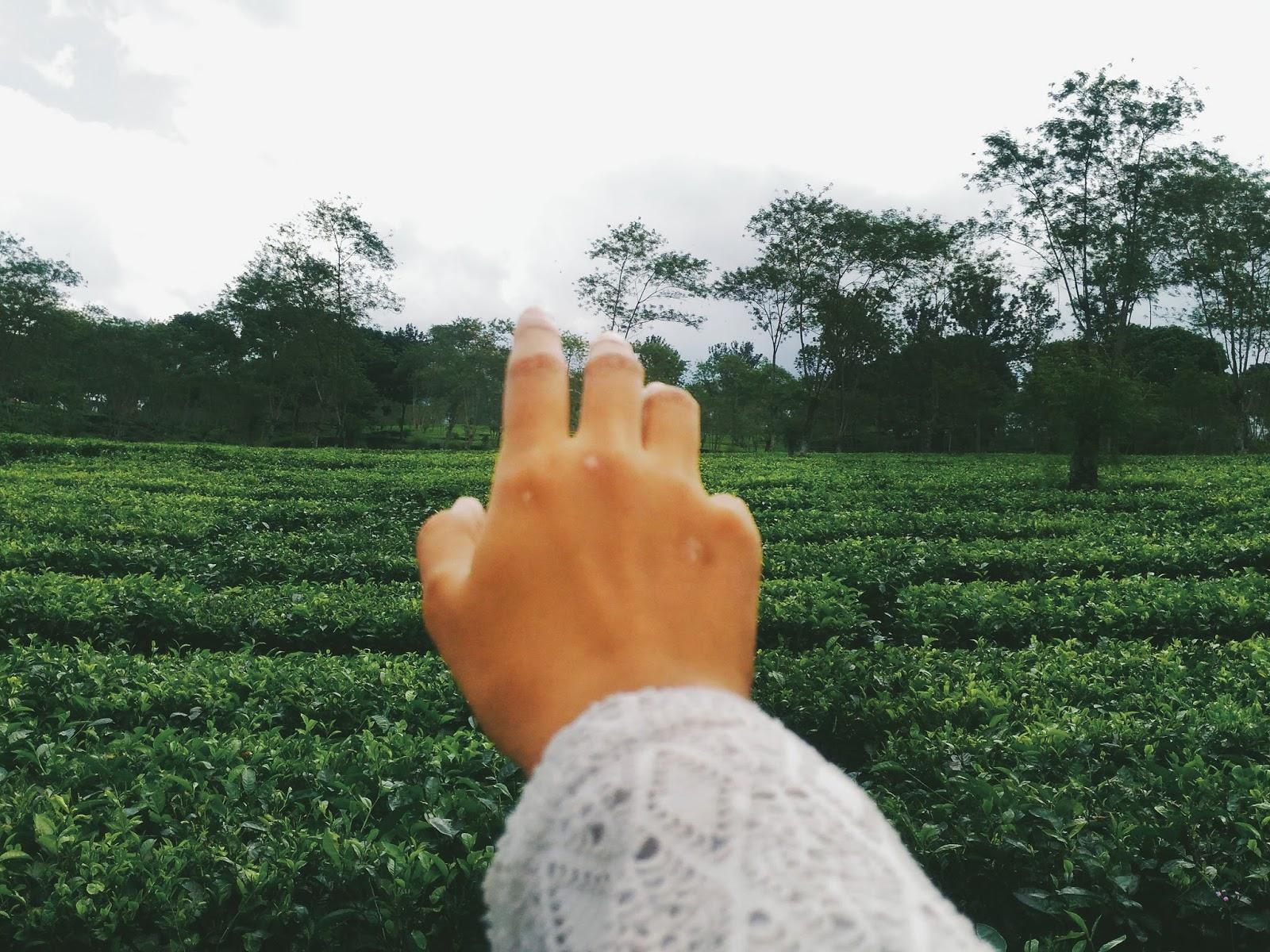 kebun teh malang