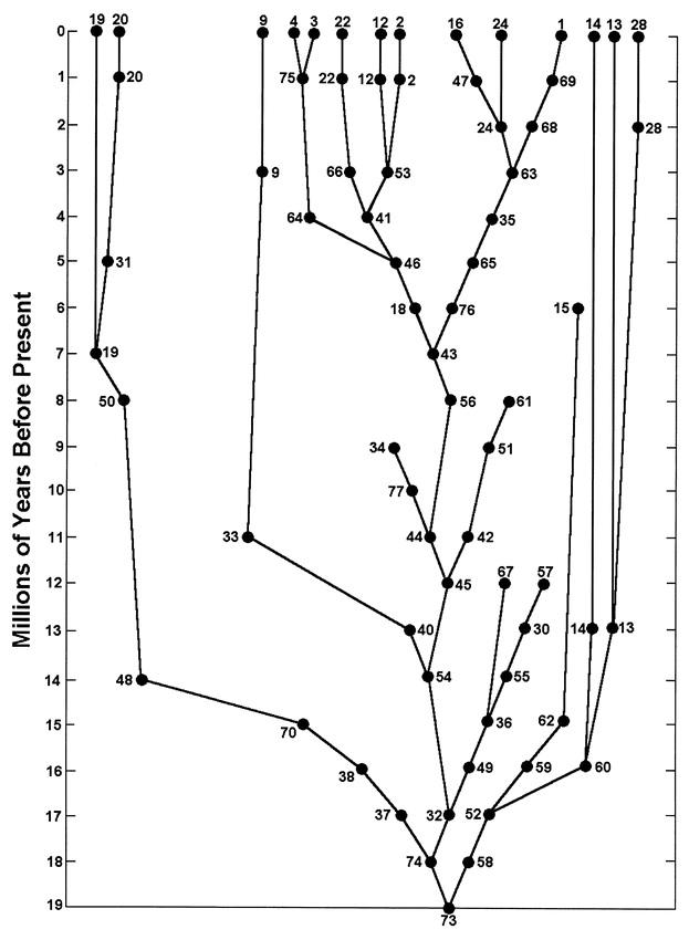 系統分類學研究實務 & 系統生物學: Caminalcules適合拿來當成支序學演算的練習題材嗎?