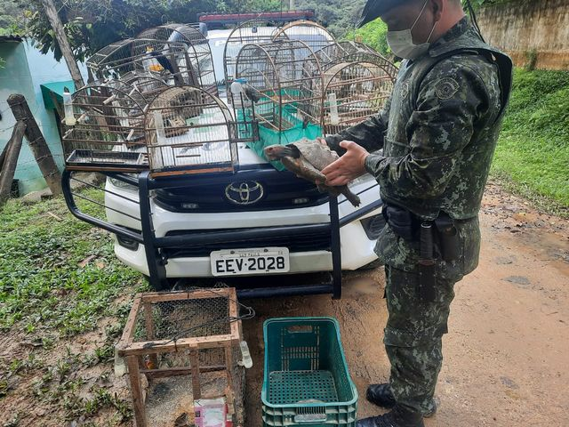 Policia Ambiental flagra pássaros e animais silvestres em cativeiro em Sete Barras