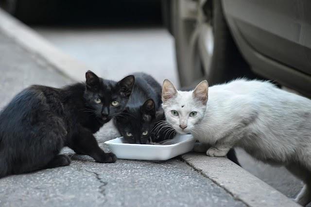 Ταΐζετε τις γάτες του δρόμου; Τι άλλο μπορείτε να κάνετε για να θωρακίσετε την υγεία τους