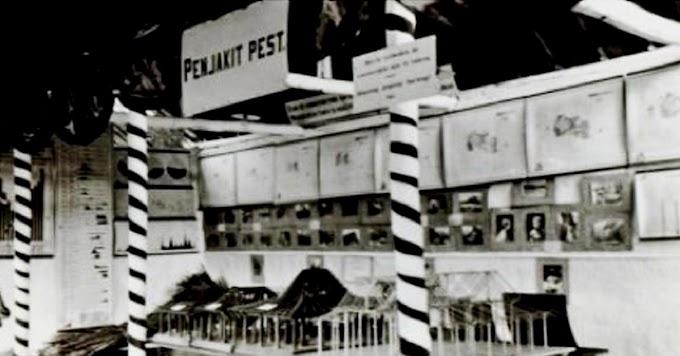 Wabah Pes Pernah Menyerang Indonesia Era Kolonial Belanda