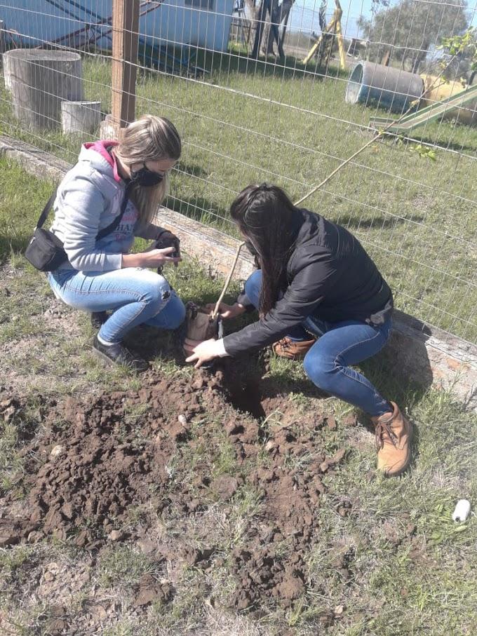 Escola Anna Riet Pinto recebe plantio de mudas
