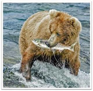 Orso che prende un salmone