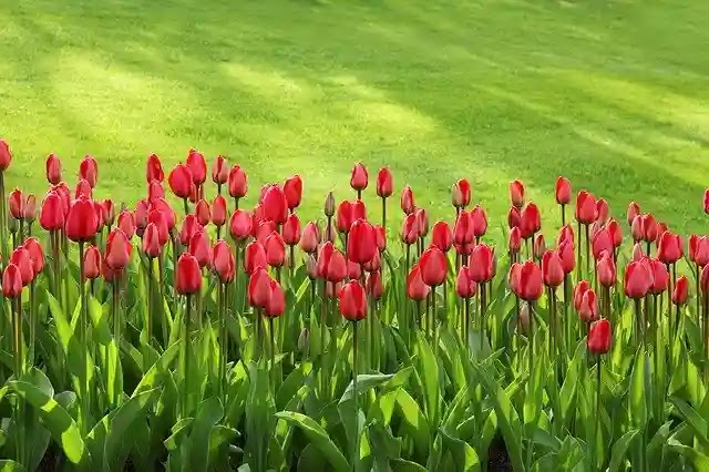حديقة الميريلاند
