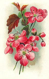 wildflower flower artwork image background illustration