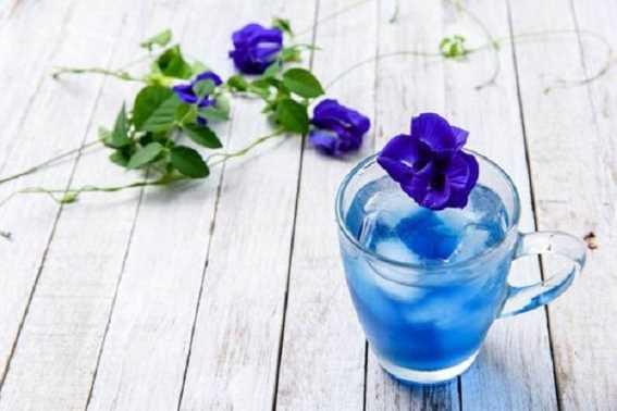 Manfaat Minum Teh Biru Bagi Kesehatan Tubuh