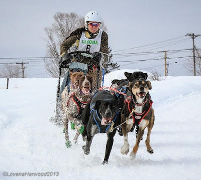 sled dog racing laconia winter