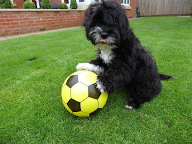 Meet this Dog which would put your soccer skills to shame (The wonder Ronaldog)